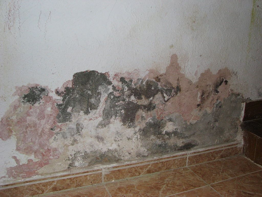C mo tratar los problemas por humedad pastor decoraciones - Como tratar la humedad en las paredes ...