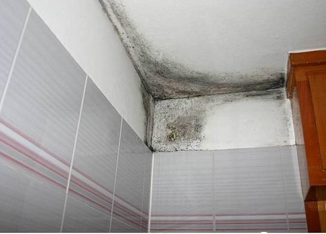 C mo tratar los problemas por humedad pastor decoraciones - Como quitar las humedades de las paredes ...